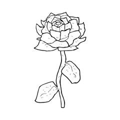 rose cartoon