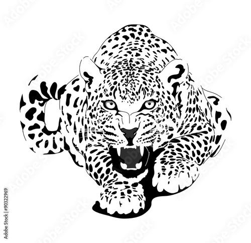 African Big Cat Leopard