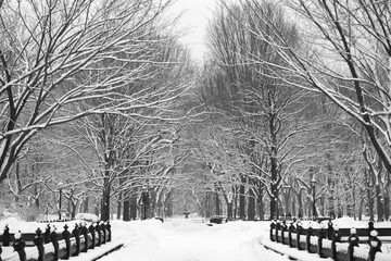 Central Park just off The Mall. Snow covered trees between snowstorms.