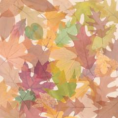 translucent colored autumn