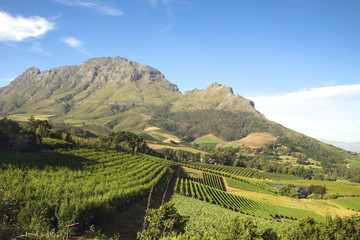 Landscape of the wineries in South Africa