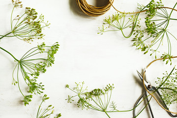 Fototapeta Flower of green dill on wooden background with copy space. Fennel. obraz