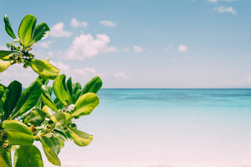 Printed kitchen splashbacks Cocktail blue sky with beach sea and leaf - film filter