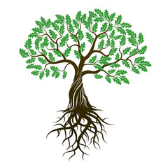 Vector Color Oak Tree with green Leafs and Roots.