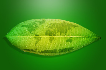 Green leaf environment concept save the earth.