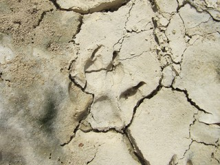 Huella fósil