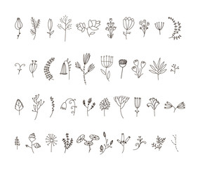 Vector set of 40 hand drawn line flowers and florals.