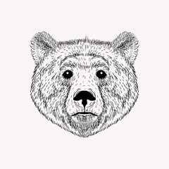 Sketch realistic face Bear. Hand drawn vector  illustration in D