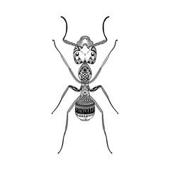 Zentangle stylized Black Ant. Hand Drawn Termite vector illustra