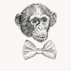 Sketch monkey face with bow tie. Hand drawn doodle vector illust