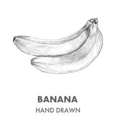 Sketch of banana. Hand drawn vector illustration. Fruit collecti