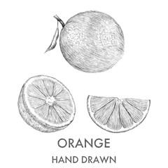 Sketch of the whole orange, half and segment. Hand drawn vector