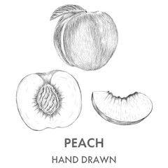 Sketch of the whole peach, half and segment. Hand drawn vector i