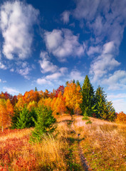 Colorful autumn morning in the Carpathian mountain forest.