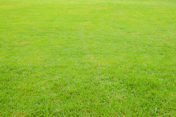 Green Lawn,grass field used for outdoors sports such as soccer.