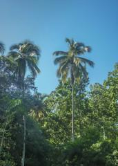 Big Trees at Tayrona National Park