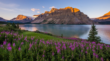 Sunrise at Bow Lake in Banff National Park Wall mural