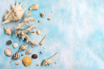 Marine items on cyan background ; shells and coral