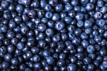 blueberries collected manually. background