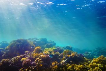 Foto auf AluDibond Unterwasser Coral and fish in the Red Sea, Egypt