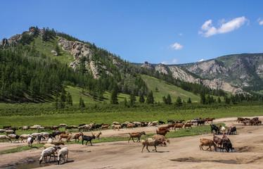 Terelj Nationalpark, Mongolei