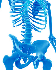 medically accurate illustration of the skeletal lumbar spine