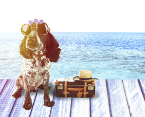 Funny dog tourist with suitcase, sunglasses and hat near pool