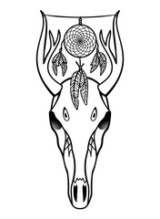 Skull of deer with dream catcher