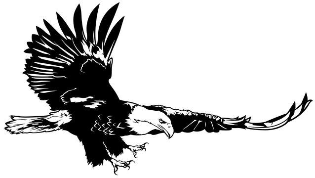 Flying Bald Eagle - Black Outline Illustration, Vector