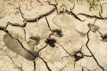 tracks and footprints of goats and a shepherd in the shoes on the cracked earth and soil.