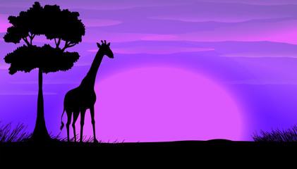 Silhouette of giraffe in safari