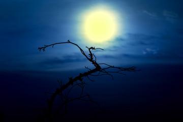 tree moon silhouette