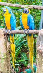 pair of brightly colored parrots