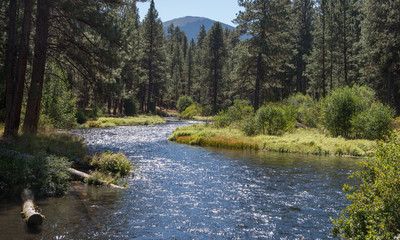 The spring-fed Metolius River flows through a Ponderosa Pine forest in the central Oregon Cascade Mountains with Black Butte in the background