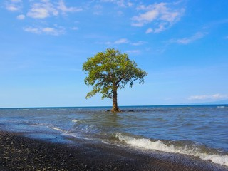 Alone Tree, Lombok