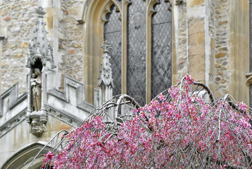 Bare tree with pink leaves with a church in background
