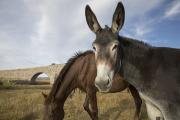 Portrait of a mule against blue sky