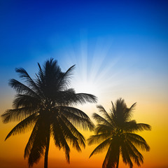 palm trees silhouette on sunset with two tone sky