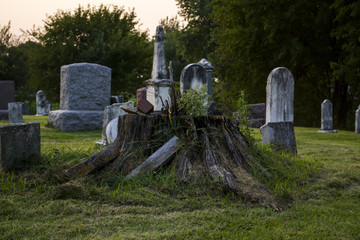 Tree stump in old graveyard with tombstones