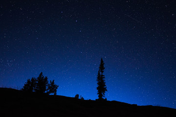 Night sky at the Grand Teton National Park. This was by far the darkest sky I have experienced. from watching shooting stars streak across the sky to witnessing satellites circling the earth.