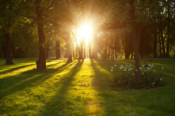Beautiful nature at evening in spring forest, trees with sun ray