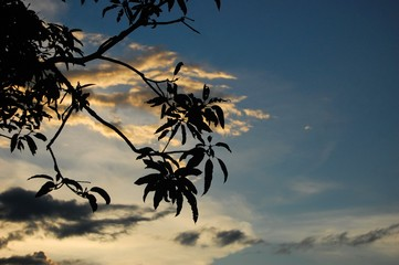 Silhouette of leaves with sky in the background photo image