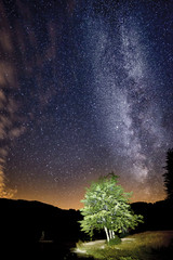 milky way in the mountains with tree in the foreground