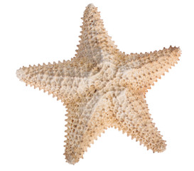 beige starfish isolated on white