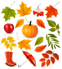 Wall Mural - Set of colorful autumn leaves and objects. Vector illustration.