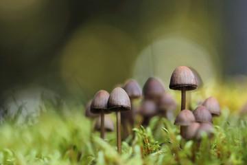 small mushrooms toadstools