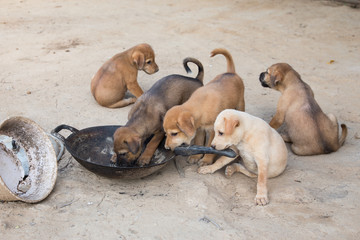 Puppies eat are hungry eat poor scramble.