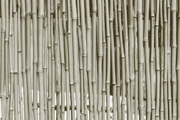 fence from a dry bamboo of dirty gray color