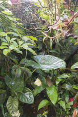Fototapete - rain in forest jungle