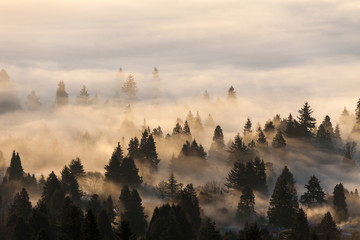 Wall Murals Morning with fog foggy forest